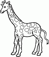 giraffe coloring page giraffe free printable coloring pages