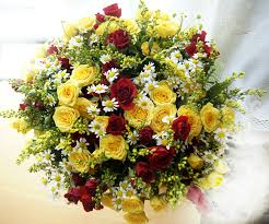 free images petal daisy gift autumn christmas decoration