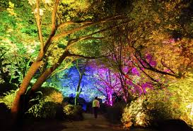 forests november 2017 browse articles s teamlab collective lights up the forest cnn style