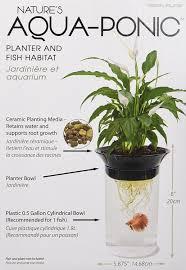 amazon com penn plax aquaponic betta fish tank promotes healthy