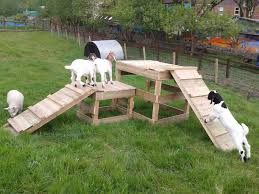 dog playground in 5 hrs diy how to outdoor living pallet