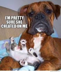 Funny Boxer Dog Memes - these dogs meme serious business album on imgur