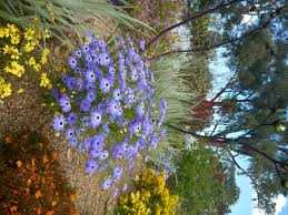 Kings Park Botanic Garden by A Beautiful Display At Kings Park In Perth Highlighted By Swan