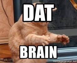 Dat Ass Cat Meme - dat brain dat ass cat meme generator