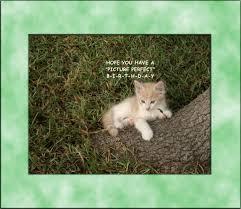 birthday wishes kitten free birthday wishes ecards greeting