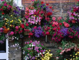 Ideas For Container Gardens 10 Container Garden Ideas That Are Cheap Or Free