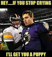 Steelers Ravens Meme - 30 best anti ravens images on pinterest baltimore ravens