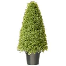 boxwood tree with green pot 36 target