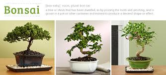 Easy To Care For Indoor Plants Bonsai Tree Care For Beginners U2014everything You Need To Know