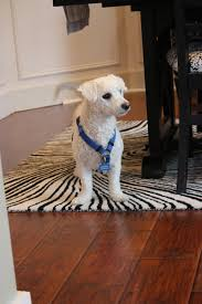 Laminate Flooring For Dogs The Yellow Cape Cod 31 Days Of Building Character More On The Floor