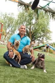 Millan Patio Furniture by 60 Best Dog Whisperer Cesar Millan Images On Pinterest Dog