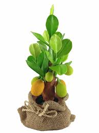 harvie home decor artificial jackfruit tree clay plant model