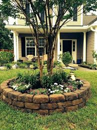 trees for front yard tree best ornamental trees front yard