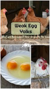 pin weak egg yolk2 jpg