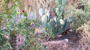 in fall spring feel in fall arizona desert food forest youtube