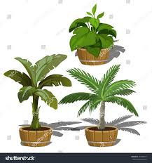 plants for office tropical plants office home vector illustration stock vector