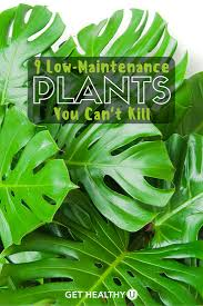 9 low maintenance plants you can u0027t kill get healthy u
