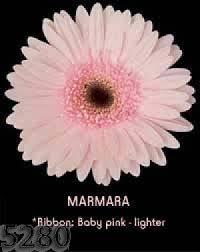 wholesale flowers denver denver wedding flowers bouquets centerpieces