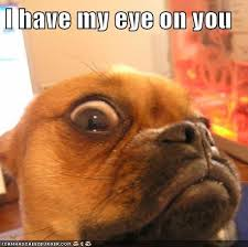 Watching You Meme - i has a hotdog watching you funny dog pictures dog memes