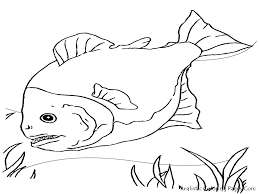 plain fish coloring pages exactly awesome article ngbasic com