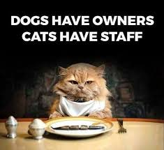 Funniest Cat Meme - wordless wednesday funny cat memes ww moms own words