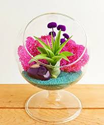 amazon com hand crafted terrarium for your office or home