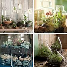 indoor cactus garden decorating ideas home outdoor decoration