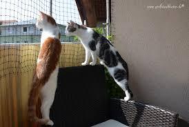 katzennetze balkon balkon katzennetz ohne bohren katzennetz am balkon anbringen