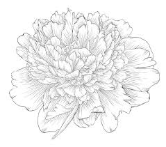 Flower Drawings Black And White - vintage patterns black and white japanese google search