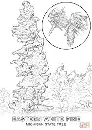 Pine Tree Flag Tree Coloring Pages Michigan State Page Grig3 Org