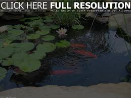 backyard koi pond landscaping ideas surprising how build small