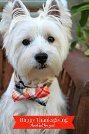 thanksgiving dog the white dog blog november 2015