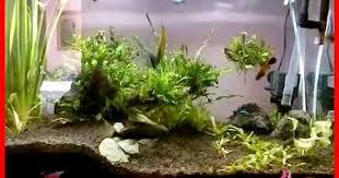 ikan laut biota laut jual ikan hias aquarium air laut