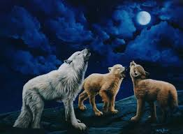 wildlife by curtin wolves howling