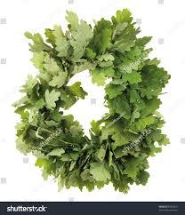 White Oak Leaf Wreath Oak Leaves Isolated On White Stock Photo 87835651