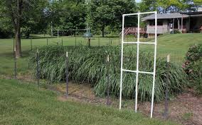 decorate your fence with a custom trellis from pvc pipe goodwill