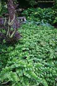plants native to wisconsin 114 best garden wi images on pinterest gardening flower