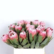 Protea Flower Proteas Wholesale Flowers Uk Wedding Flowers Protea