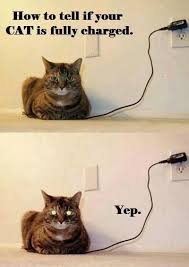 Random Cat Meme - oh good the cat is fully charged meme cat and memes