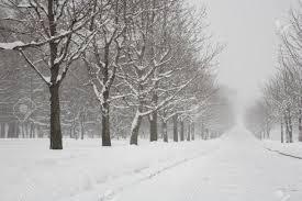 winter park in blizzard snow and trees stock photo picture and