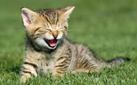 pics of kittens qygjxz