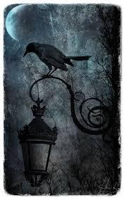 halloween background crow 478 best crow images on pinterest crows ravens animals and bird art