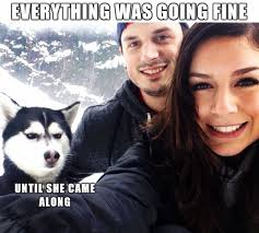 Came Meme - animal memes until she came along funny memes