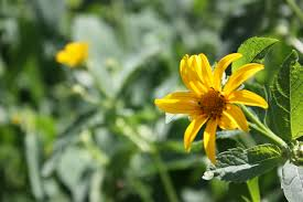 The Month Of June Flower - hnes native plant garden at york university a site for sharing