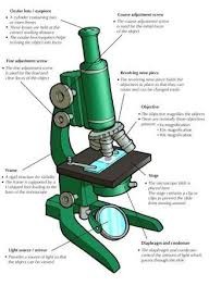compound light microscope facts image result for compound light microscope parts and their functions