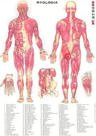 ont i pungen vad för muskel sitter här arkiv kolozzeum forum sveriges