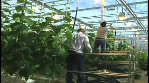 high tech greenhouse youtube
