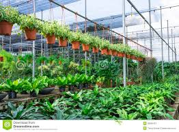 plant nursery stock image image of flora plant grow 35884431