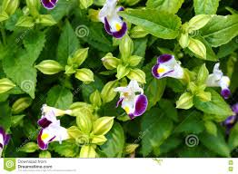 A Garden Of Flowers by Garden Of Flowers Purple And White Stock Photo Image 49901944