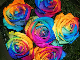 colorful roses colorful seed olaprice